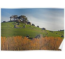 Highlands Boulders & Cows & Sheep Poster