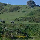 Dartmoor Haytor by Chris Martin