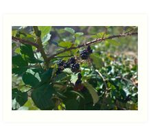 Blackberries - Dartmoor Art Print