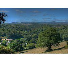Oaktree - Dartmoor Photographic Print