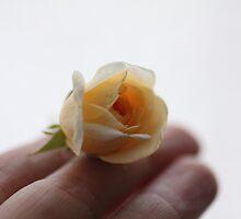 little yelow rose by Lavanda
