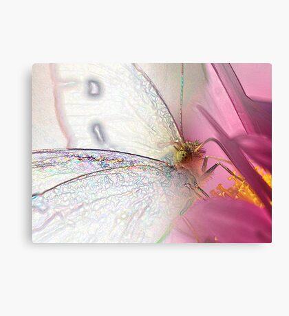 Garden Fairy (Pieris rapae) Canvas Print