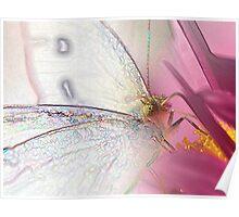 Garden Fairy (Pieris rapae) Poster