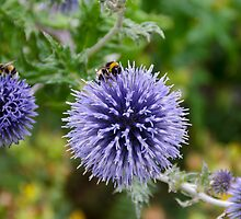Bumbling Bees at the Birmingham Botanical Gardens by JohnYoung