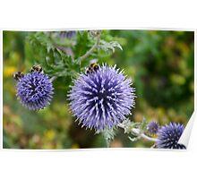 Bumbling Bees at the Birmingham Botanical Gardens Poster