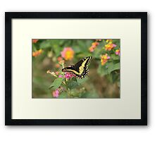 Butterfly on Yellow and Pink Flower Framed Print