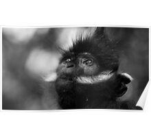 Monkey Prayer Poster