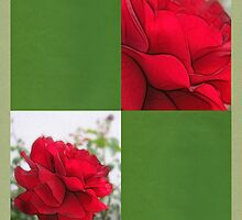 Red Rose Edges Blank Q5F0 by Christopher Johnson