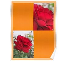Red Rose Edges Blank Q8F0 Poster