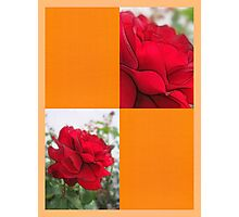 Red Rose Edges Blank Q8F0 Photographic Print