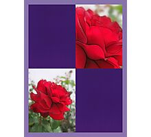 Red Rose Edges Blank Q9F0 Photographic Print