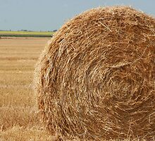 Straw Bale on a Field by rhamm