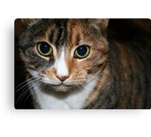 pbbyc - Belle - Boss Cat Canvas Print