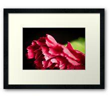 Pink Ruffles in the dark Framed Print