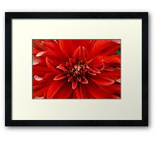 Red dahlia flower Framed Print