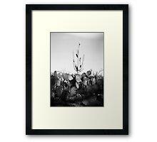 Saguaro Cactus Holga Photo Framed Print
