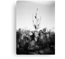 Saguaro Cactus Holga Photo Canvas Print