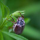 benny the may-bug by ma-fleur-art