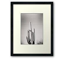 Saguaro Holga Photo Framed Print