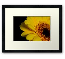 Sultry yellow gerbera in the dark Framed Print