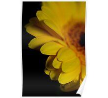 Sultry yellow gerbera in the dark II Poster