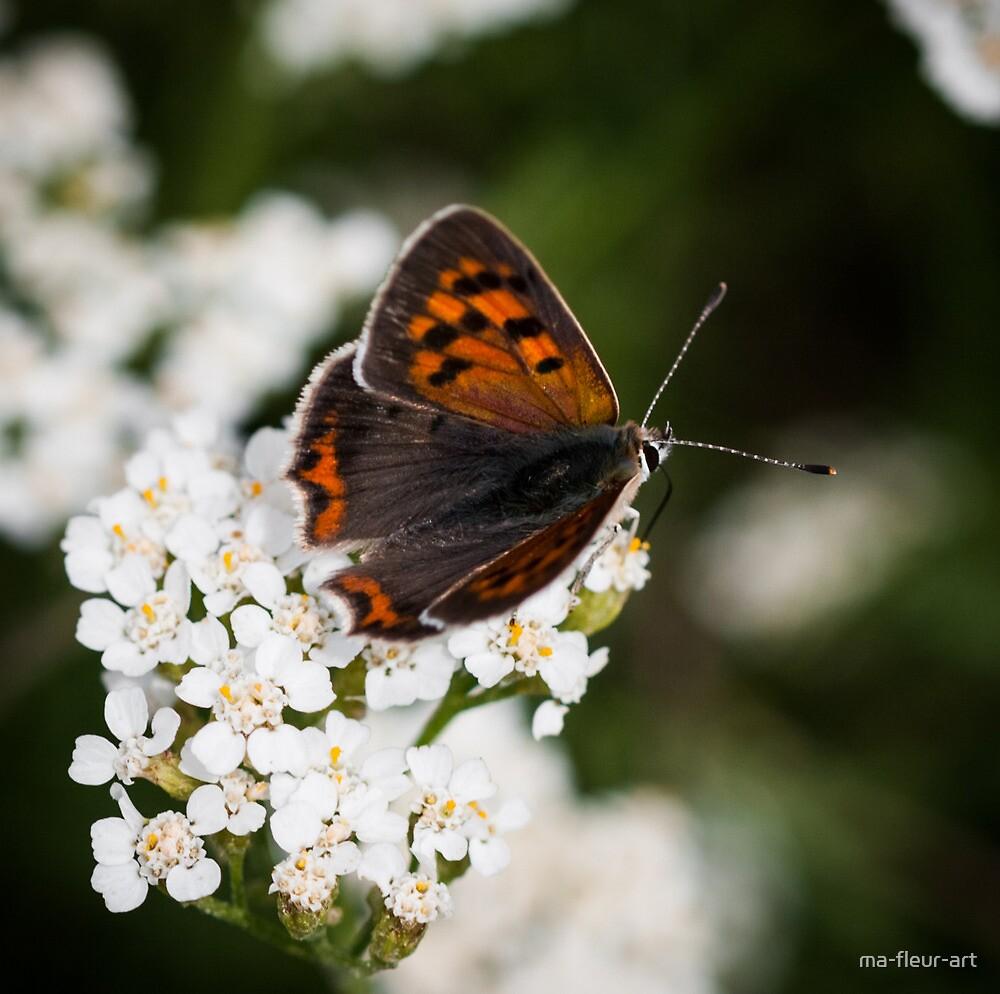 small copper by ma-fleur-art