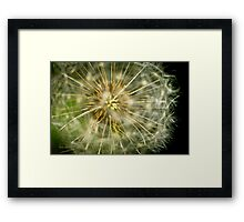 Dandelion - 'clock flower' Framed Print