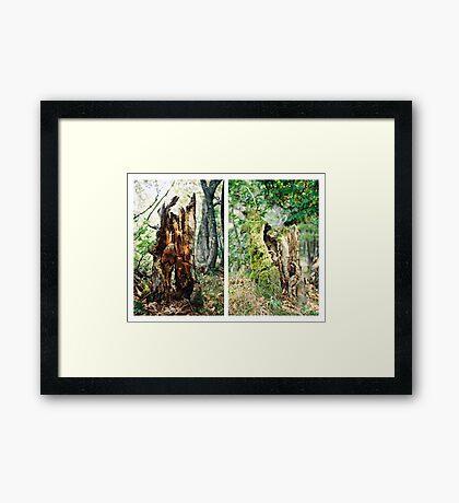 Tree Afterlife I. & II. Framed Print