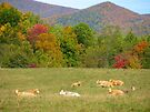 Cow Fields In Fall by Ginny York