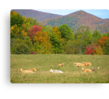 Cow Fields In Fall Canvas Print