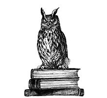Library owl  Photographic Print