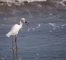 Egret with Sand Crab by Paul Wolf