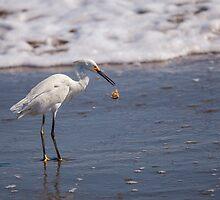Egret Drop by Paul Wolf
