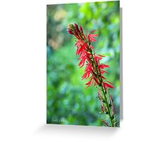 Cardinal Flower in its Glory Greeting Card
