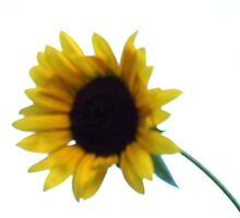 Pretty and Bright Yellow Sunflower Blossom 38 by JaguarJulie