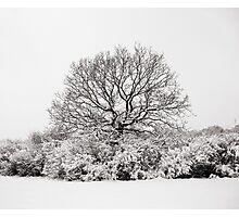 Snowy Tree Photographic Print