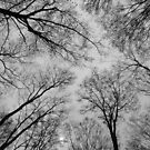 Spring Trees - Black and White 3 by Tracy Faught