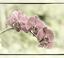 orchid by Andy Curtis