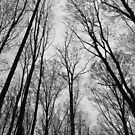 Spring Trees - Black and White 2 by Tracy Wazny