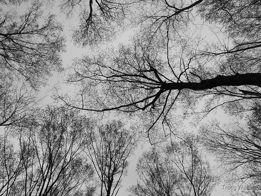 Spring Trees - Black and White 1 by Tracy Wazny