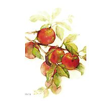 autumn apples watercolor Photographic Print