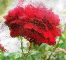 Red Rose with Light 1 Sketchy by Christopher Johnson