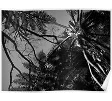 Scary Trees- Mount Lofty Gardens Poster