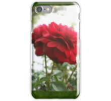 Red Rose with Light 1 Blank P1F0 iPhone Case/Skin