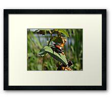 Beetle Juice Framed Print