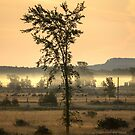 Foggy Morning on the Billings Stretch by Mikell Herrick