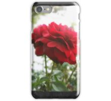 Red Rose with Light 1 Blank P4F0 iPhone Case/Skin