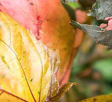 foliage by Anne Scantlebury
