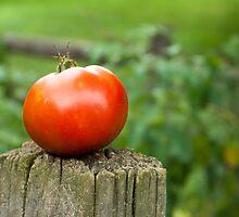 Garden Tomato by Irene VanBuskirk