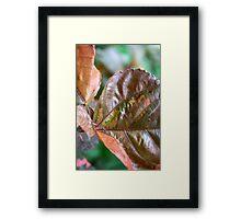 coloured foliage Framed Print
